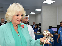 The Duchess of Cornwall visits a falcon hospital in Abu Dhabi, United Arab Emirates, during the royal tour of the Middle East.
