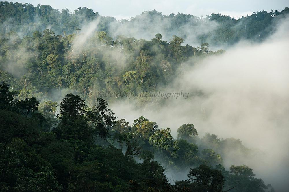 Mashpi Forest<br /> Mashpi Rainforest Biodiversity Reserve<br /> Pichincha<br /> Ecuador<br /> South America