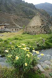 Flora & Inca Ruins