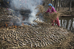 December 18, 2018 - Srinagar, Kashmir - A Kashmiri woman prepares smoked fish over burning grass in the outskirts of Srinagar city, the summer capital of Indian-controlled Kashmir. Smoked fish, locally called 'Fahre', are highly demanded during winters in Indian-controlled Kashmir. (Credit Image: © Javed Dar/Xinhua via ZUMA Wire)