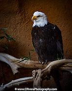 Santa Ana Zoo PhotoWalk