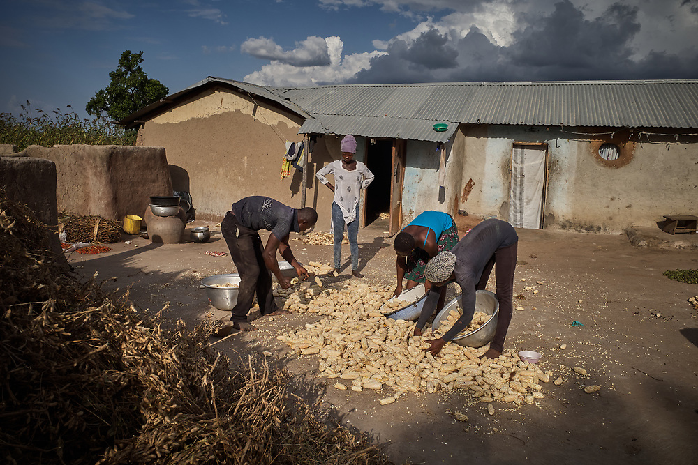 30/10/2019 Tambalug / Ghana: <br /> Robert and Cynthia with the help of other family members quickly pack their corn from the compound before the rains begin. They've already lost a lot of their harvest to aflatoxins due to the persistent rainfall. The rains should have ceased a month ago.<br /> <br /> For the past five years, Oxfam has been absent in Kpatia and Tambalug (2 communities in Garu Tempane District of the Upper East Region of Ghana).  This project is a visual documentary study on the impact of climate change on these farming communities, in the absence of fresh aid.