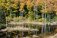 Fall leaf color at a small beaver pond (near Shilly Shally Shelter) in Gatineau Park, Gatineau, Québec, Canada.  Photographed from the Lac Fortune Parkway during Fall Rhapsody at Gatineau Park.