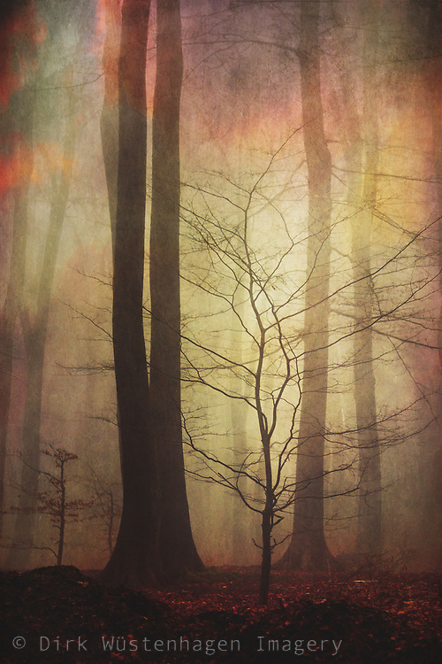 Tree silhouettes in a misty forest on an autumn morning - photograph edited with texture overlays