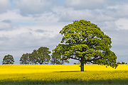Scenery around the village of Barcombe in East Sussex on Friday 05 May 2017 Photo Jane Stokes / DJ Stotty Images