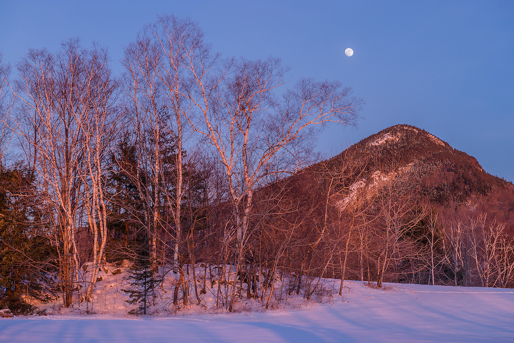 Birch trees & Mt Sugarloaf, with full moon rising over snow covered winter scene, Haverhill, NH