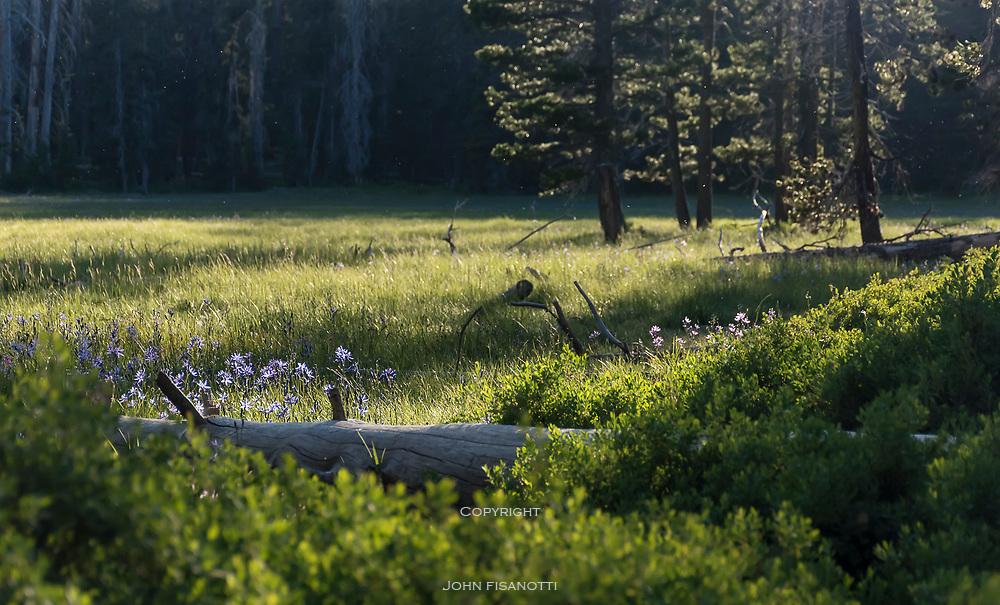 Meadow at Harden Lake, Yosemite National Park