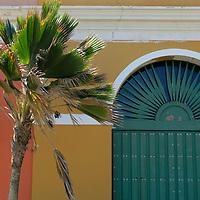 USA, Puerto Rico, San Juan. Palm and facade of Old San Juan, Puerto Rico.