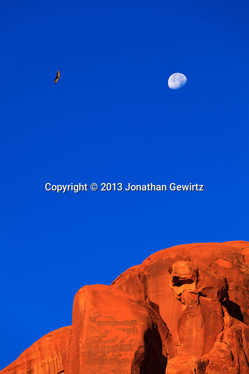 Under a setting moon, a turkey vulture soars over a rock cliff in Arches National Park, Utah. WATERMARKS WILL NOT APPEAR ON PRINTS OR LICENSED IMAGES.<br /> <br /> Licensing: https://tandemstock.com/assets/20513811