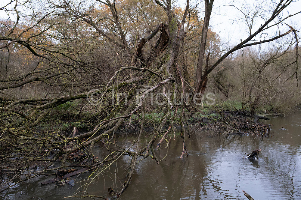 Trees refelcted in water on the River Brent on 4th December 2020 in London, United Kingdom. This area is an offshoot of the Grand Union Canal and provides an very healthy habitat for many species of birds.