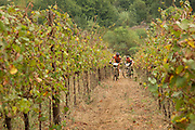 Markus Kaufmann and Jochen Kaess of Team Centurion-Vaude climb through a vineyard during stage 1 of the 2014 Absa Cape Epic Mountain Bike stage race held from Arabella Wines in Robertson, South Africa on the 24 March 2014<br /> <br /> Photo by Greg Beadle/Cape Epic/SPORTZPICS
