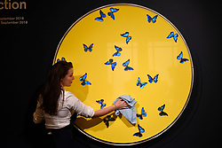 "© Licensed to London News Pictures. 14/09/2018. LONDON, UK. A technician checks ""Smashing Yellow Ball at Peace Painting"", 2008, by Damien Hirst (Est. GBP100,000-150,000) at a preview of the ""Yellow Ball: The Frank and Lorna Dunphy Collection"" sale at Sotheby's in New Bond Street.  Frank Dunphy was Damien Hirst's former business manager and mentor.  Over 200 works will be auctioned by Sotheby's on 20 September 2018.  Photo credit: Stephen Chung/LNP"