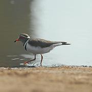 Bird wading through a waterhole.