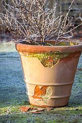 Frost damaged terracotta pot