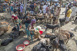 September 1, 2017 - Dhaka, Bangladesh - September 01, 2017- Dhaka, Bangladesh- Traders sits and waits their goats at a livestock market ahead of Eid-al-Adha festival in the Old Part of Dhaka on 01 September, 2017. Muslims across the world are preparing to celebrate annual festival if Eid-ul-Adha also known the festival of sacrifice which makes the end of the hall pilgrimage to Macca. © Monirul Alam. (Credit Image: © Monirul Alam via ZUMA Wire)