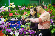 A couple shops for orchids at Jianguo Flower Market (??????) in Taipei, Taiwan.