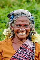 Sri Lanka, province du centre, Nuwara Eliya, plantations de thé de Ceylan, cueilleuse de thé // Sri Lanka, Ceylon, Central Province, Nuwara Eliya, tea plantation in the Highlands, Tamil woman tea picker