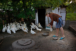 Vita Kalembet, a paralegal,  feeds livestock, Poltava, Ukraine, June 18, 2011. Kalembet spends her days helping her neighbors with legal advice while caring for her husband Anatoli Kalembet, son Vladislav Kalembet, 10, and grandmother Katarina Pereyatenets, 66. More than half of the worldÕs population, four billion people live outside the rule of law, with no effective title to property, access to courts or redress for official abuse. The Open Society Justice Initiative is involved in building capacity and developing pilot programs through the use of community-based advocates and paralegals in Sierra Leone, Ukraine and Indonesia. The pilot programs, which combine education with grassroots tools to provide concrete solutions to instances of injustice, help give poor people some measure of control over their lives.