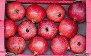 Selling Pomegranates in the market