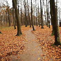 Trail through forest with fallen autumn leaves, Warnemünde, Mecklenburg-Vorpommern, Germany