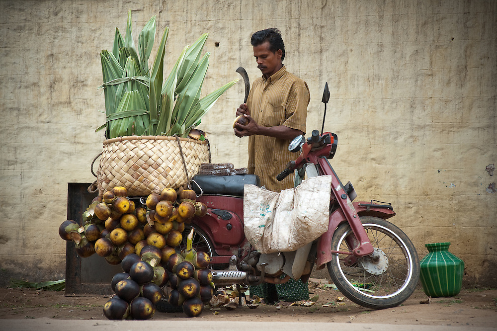 A street vendor selling sugar palm fruit on the road to Munar, Kerala.<br /> The Asian Palmyra palm, Toddy palm, Sugar palm, or Cambodian palm, is native to South and Southeast Asia, is one of the Sugar palm group, found from Indonesia to Pakistan.