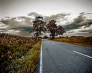 Backroad adjacent to cornfields in Georgetown, New Jersey.