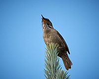 Unknown Bird. Image taken with a Nikon D2xs camera and 70-200 mm f/2.8  lens with a 1.4x TC-EII teleconverter.