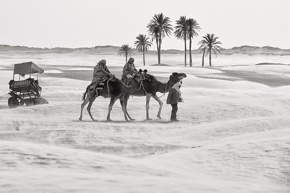 Tunisia - Camels in the desert