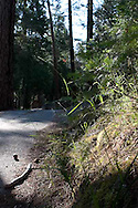 The 2009 Camp Coelho Summer Camp for children with epilepsy occurred at Camp Wawona in Yosemite.