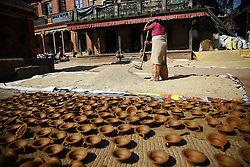 October 21, 2016 - Bhaktapur, Nepal - A Nepalese woman harvests rice as earthen pots are seen left for drying for upcoming Deepawali festival in Bhaktapur, Nepal on Friday, October 21, 2016. (Credit Image: © Skanda Gautam via ZUMA Wire)