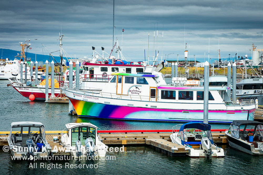Rainbow Tours boat, painted with colorful rainbow at Homer Boat Harbor, Homer Spit, Homer, Kenai Peninsula, Southcentral Alaska, Summer.