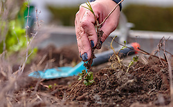 THEMENBILD - eine Frau zupft Unkraut aus dem Beet, aufgenommen am 10. April 2018 in Kaprun, Österreich // a woman plucks weeds out of the bed, Kaprun, Austria on 2018/04/10. EXPA Pictures © 2018, PhotoCredit: EXPA/ JFK