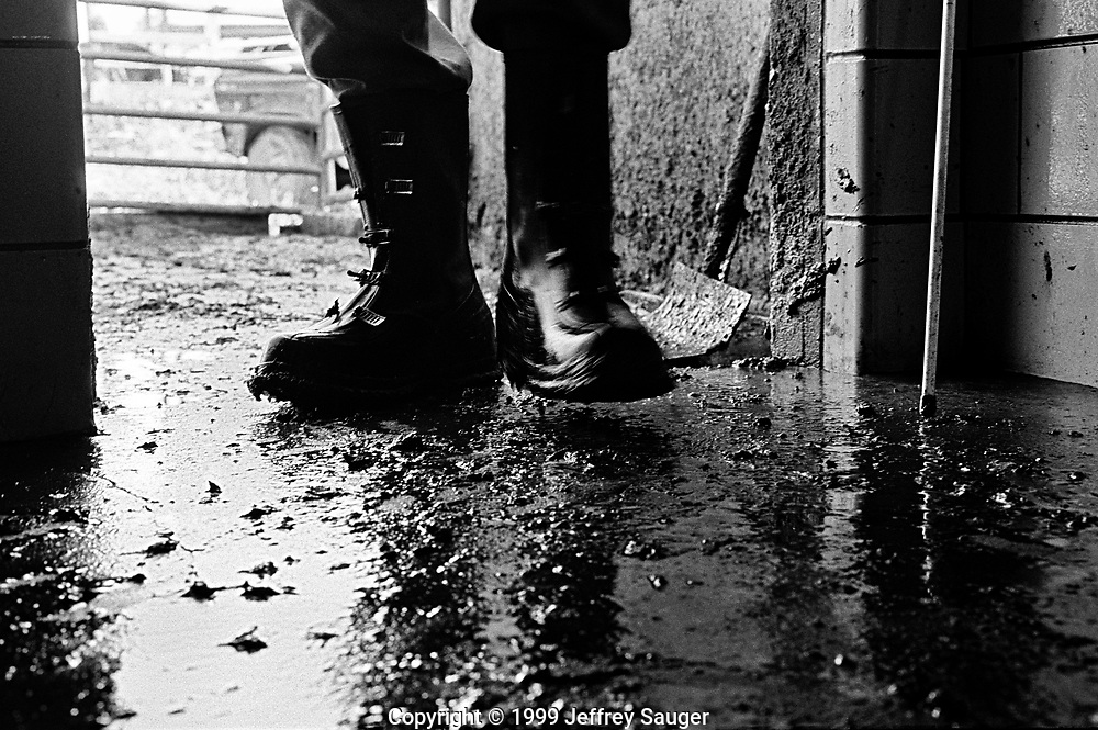 """BIDWELL, OHIO - October 1999: Bill Howard works in his milking barn at his farm in Bidwell, Ohio, in October 1999. With two milkings-a-day, Bill Howard spends a minimum of six-hours-a-day in rubber boots on the slippery concrete floor of his milking barn that is covered with cow waste. The 55-year-old former high school football star has high blood pressure, diabetes, arthritis in his hands, blood poisoning in his left foot and a bad knee from his football days. His doctor believes his leg was broken and he just kept playing football without knowing. """"I'm just falling apart,"""" He said. (Photo by Jeffrey Sauger)"""