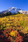 Mount Rainier from the Alta Vista Trail in Paradise Park, Mount Rainier National Park, Washington