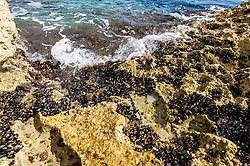 THEMENBILD - Klippen mit Muscheln behangen an der Adria, aufgenommen am 27. Juni 2018 in Pula, Kroatien // Cliffs with shells at the Adriatic Sea, Pula, Croatia on 2018/06/27. EXPA Pictures © 2018, PhotoCredit: EXPA/ JFK
