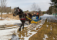 """Gilford"" a 9 year old Arab Percherom pulls an 1895 sleigh with Rick and Connie Moses on board Monday morning at Bolduc Park.  The sleigh has been restored by the late Don Chesebrough and Bob Bolduc.    (Karen Bobotas/for the Laconia Daily Sun)"