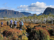 Mountains rise above bushwalkers on the Overland Track, in Cradle Mountain-Lake St Clair National Park, Tasmania, Australia. The Tasmanian Wilderness was honored as a UNESCO World Heritage Site in 1982, expanded in 1989. The famous Overland Track features mountains, temperate rainforest, wild rivers, alpine plains, abundant birds, and other wildlife. The most extensive dolerite formations in the world dominate the landscape of Tasmania, where magma intruded into a thin veneer of Permian and Triassic rocks over perhaps a million years during the Jurassic breakup of supercontinent Gondwana in the Southern Hemisphere, forming vast dolerite/diabase sills and dike swarms. (North American geologists use the term diabase instead of dolerite to refer to the fresh, unaltered rock.)