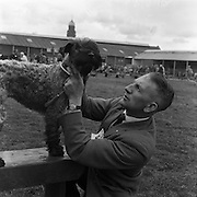 17/03/1961<br /> 03/17/1961<br /> March 3, 1961<br /> Irish Kennel Club Dog Show