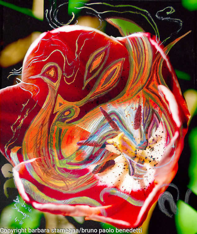 dominant red tones abstract art image with central warm colors shape on dark green dappled background