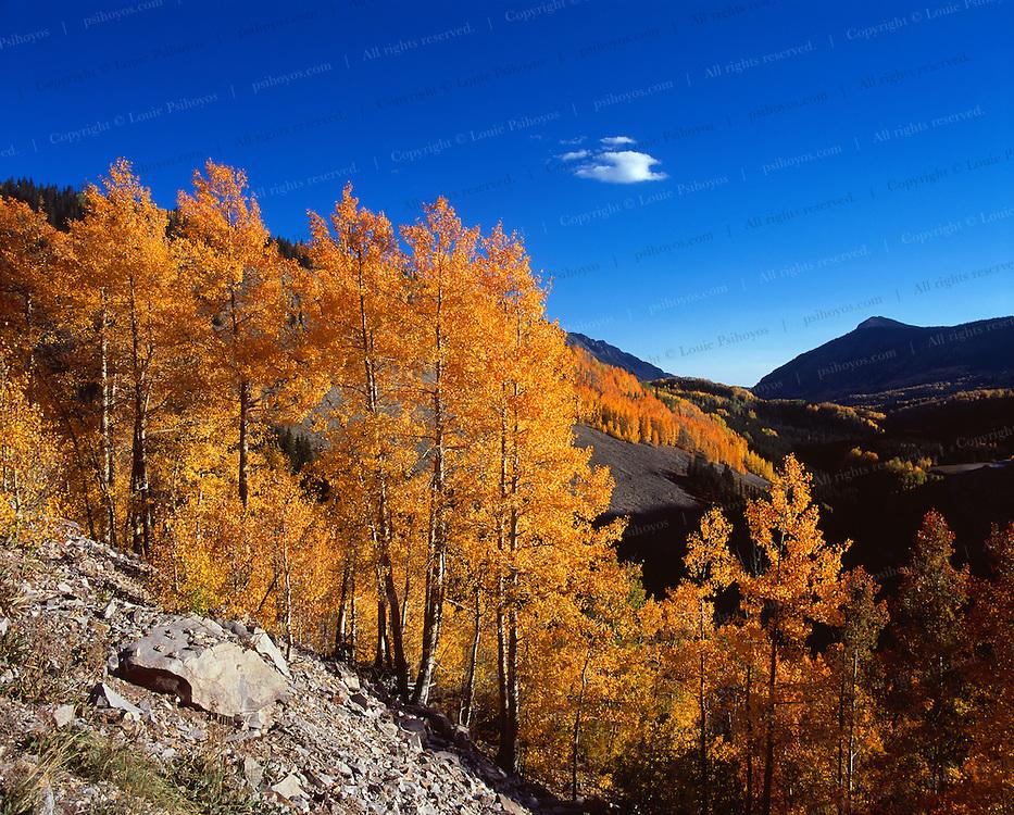 Fall colors near Durango, Colorado.