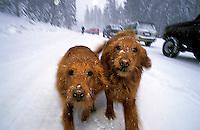 © Justin Bailie / www.coreyography.com..Coreyography, LLC.1760 Nadowa Street.South Lake Tahoe, CA 96150.530.577.7177
