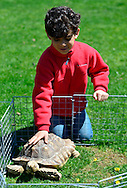 April 21, 2013 - Roslyn Harbor, New York, U.S. - At Celebrate Earth Day at Nassau County Museum of Art, a young boy pets a large turtle, one of the animals the Science Museum of Long Island Hands on Science Activity Center brought.