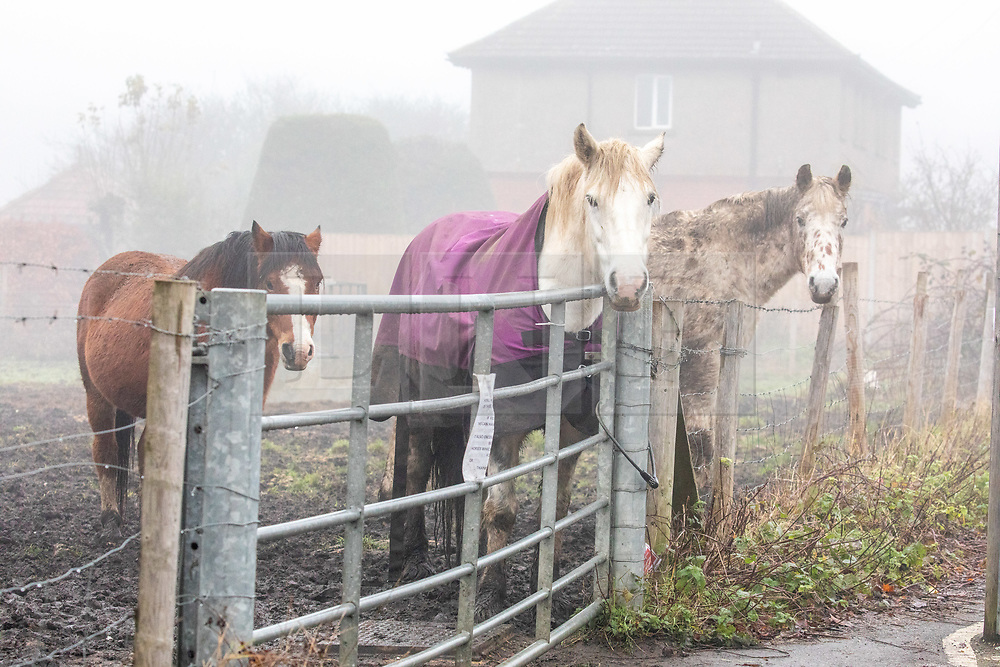 © Licensed to London News Pictures. 07/12/2020. Surrey, UK. Horses graze in a field in the dense fog in Leatherhead, Surrey as the Met Office issue a yellow weather warning for freezing fog with disruption to transport for the South East of England this morning. The Government is expected to rolling out the new Pfizer/BioNTech's coronavirus vaccine tomorrow with reports it has already arrived in the UK for distribution to hospitals around the country. Photo credit: Alex Lentati/LNP