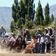 Murray Hellewell from Lawrence in action during the Open Rope and Tie at the Wanaka Rodeo. Wanaka, South Island, New Zealand. 2nd January 2012