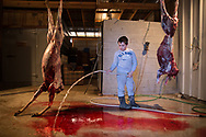 Two weeks before the end of deer hunting season Cole Voak is at his families' business, The Skinning House in Headland, AL. HWY. 431 North at mile marker 34