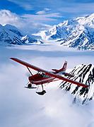 K2 Aviation's Cessna 185 on wheel skis flying above the Kahiltna Glacier with Mt. McKinley beyond, Denali National Park, Alaska.