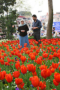 Turkey, Istanbul, A muslim couple stroll in a field of tulips