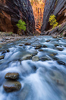 The Virgin River carves its path through the sandstone walls of the Narrows in Zion National Park in Southwest Utah on a warm Fall day.