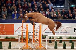 020, Kartouche<br /> KWPN Stallionshow - 's Hertogenbosch 2018<br /> © Hippo Foto - Dirk Caremans<br /> 31/01/2018