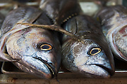 Detail of the heads of tuna fish on sale at the Mercado de Mariscos (Fish Market) in Ensenada, Baja California Norte, Mexico.